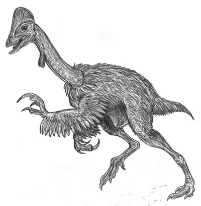 An artist's impression of Chirostenotes