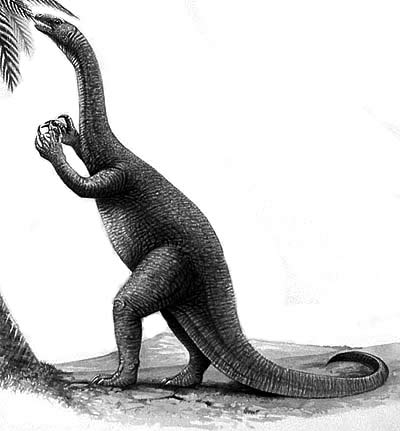 An artist's impression of Coloradisaurus