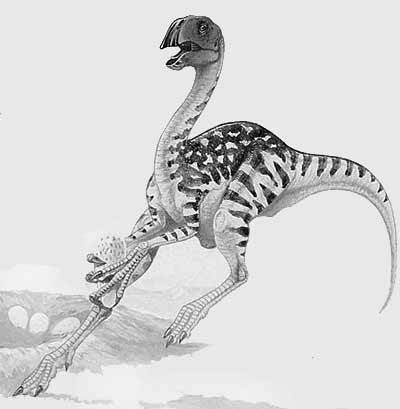 An artist's impression of Conchoraptor