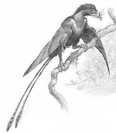 An artist's impression of Confuciusornis