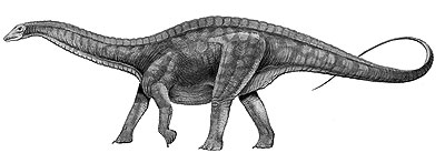 An artist's impression of Dicraeosaurus