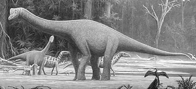 An artist's impression of Europasaurus