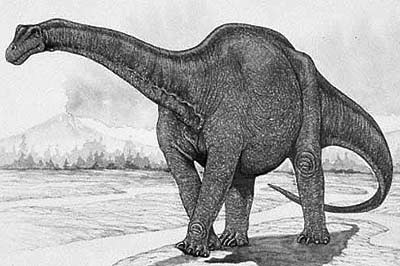 An artist's impression of Haplocanthosaurus