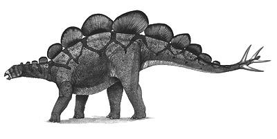 An artist's impression of Hesperosaurus