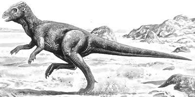 An artist's impression of Homalocephale