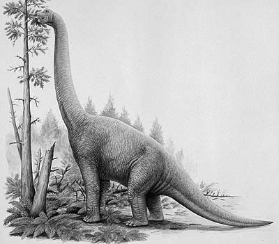 An artist's impression of Lapparentosaurus