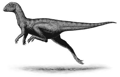 An artist's impression of Leaellynasaura