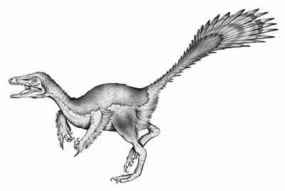 An artist's impression of Microraptor
