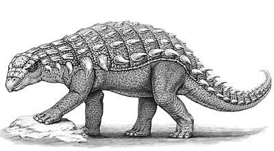 An artist's impression of Panoplosaurus
