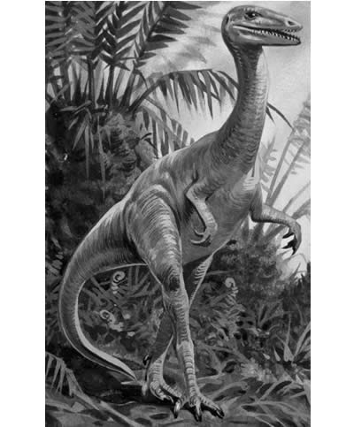 Dino Directory Name A-Z - Dinosaurs beginning with the