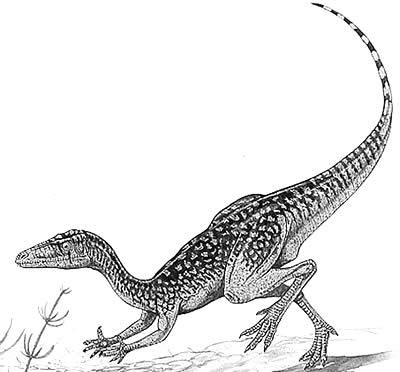 An artist's impression of Procompsognathus