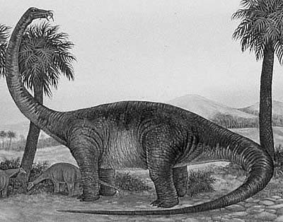 An artist's impression of Quaesitosaurus