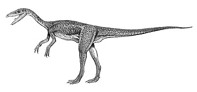 An artist's impression of Segisaurus