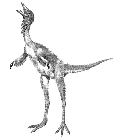 An artist's impression of Shuvuuia