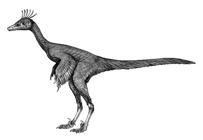 An artist's impression of Sinovenator