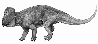 An artist's impression of Udanoceratops