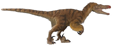 velociraptor natural history museum