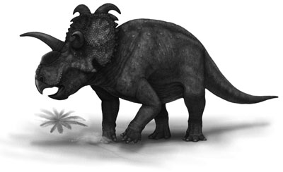 An artist's impression of Albertaceratops