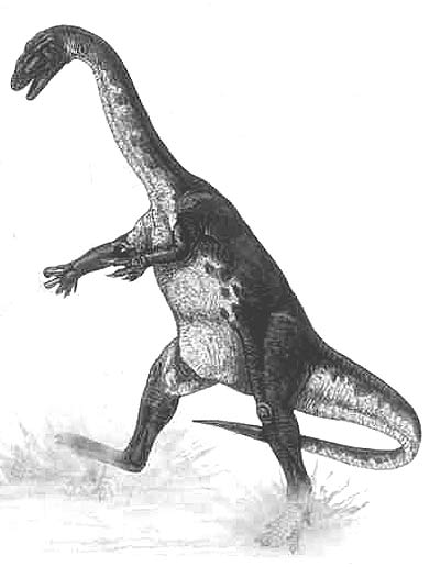 An artist's impression of Ammosaurus