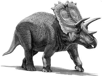 An artist's impression of Anchiceratops