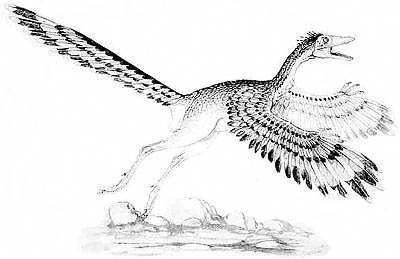 An artist's impression of Archaeopteryx