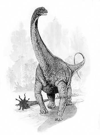 An artist's impression of Argentinosaurus
