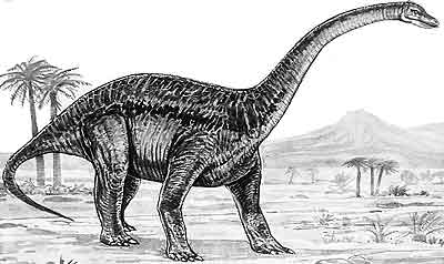 An artist's impression of Barapasaurus