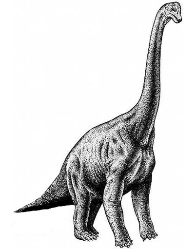 An artist's impression of Brachiosaurus
