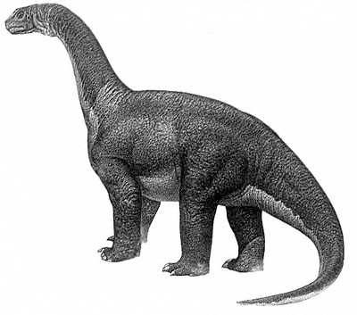 An artist's impression of Camarasaurus