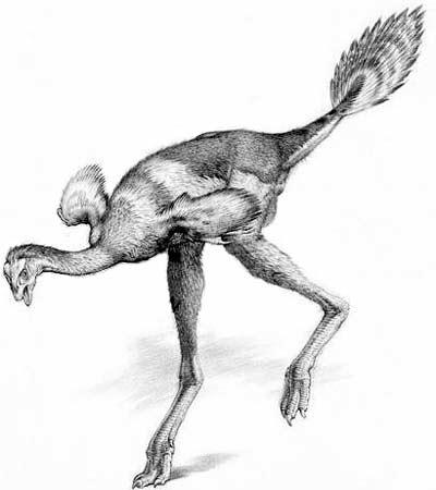 An artist's impression of Caudipteryx
