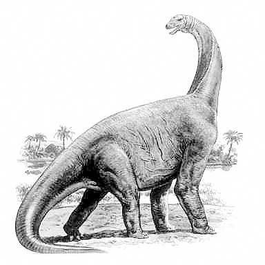 An artist's impression of Cetiosaurus