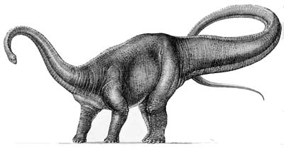 An artist's impression of Diplodocus