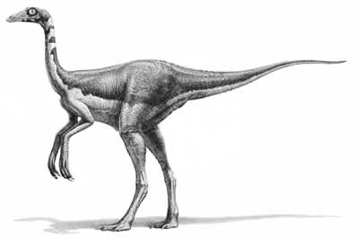 An artist's impression of Dromiceiomimus