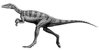 An artist's impression of Eoraptor