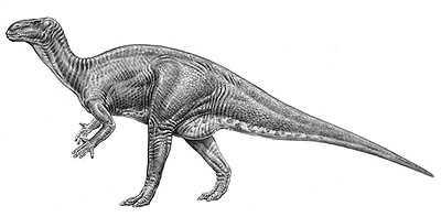 An artist's impression of Iguanodon