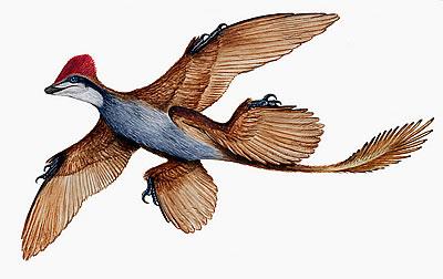 Microraptor milieu