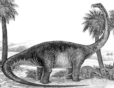 An artist's impression of Saltasaurus