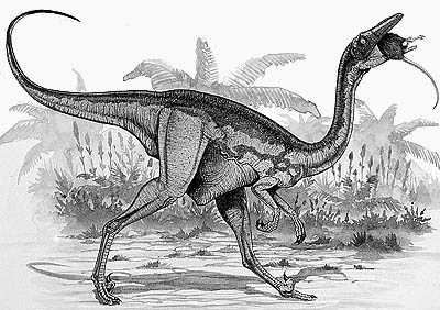 An artist's impression of Saurornithoides