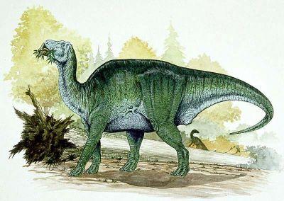 Shantungosaurus milieu