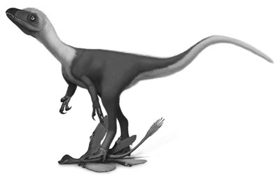 An artist's impression of Sinocalliopteryx