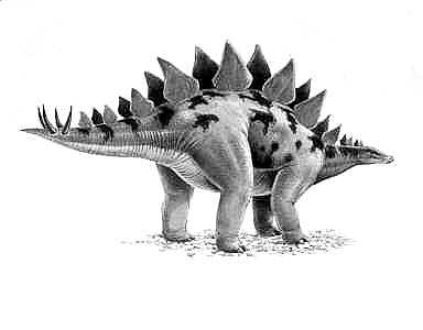 An artist's impression of Stegosaurus