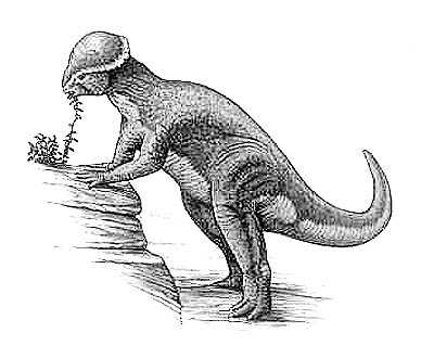 An artist's impression of Stegoceras
