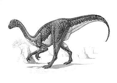 An artist's impression of Therizinosaurus