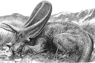 An artist's impression of Torosaurus