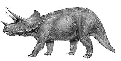 An artist's impression of Triceratops