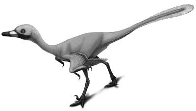 Urbacodon