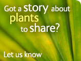 Plant story