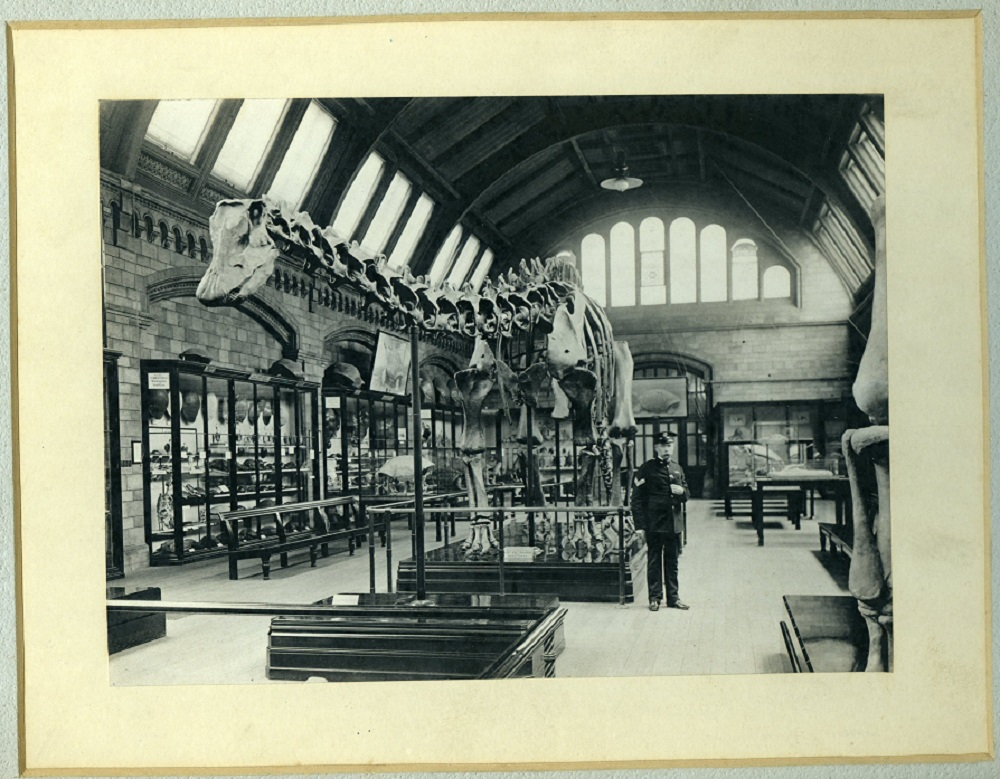 http://www.nhm.ac.uk/resources/natureplus/images/library/20150325/PH_3_2_3_24_dippy.jpg