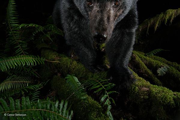 http://www.nhm.ac.uk/resources/natureplus/wpy-blog/wpy53/Trap2.jpg