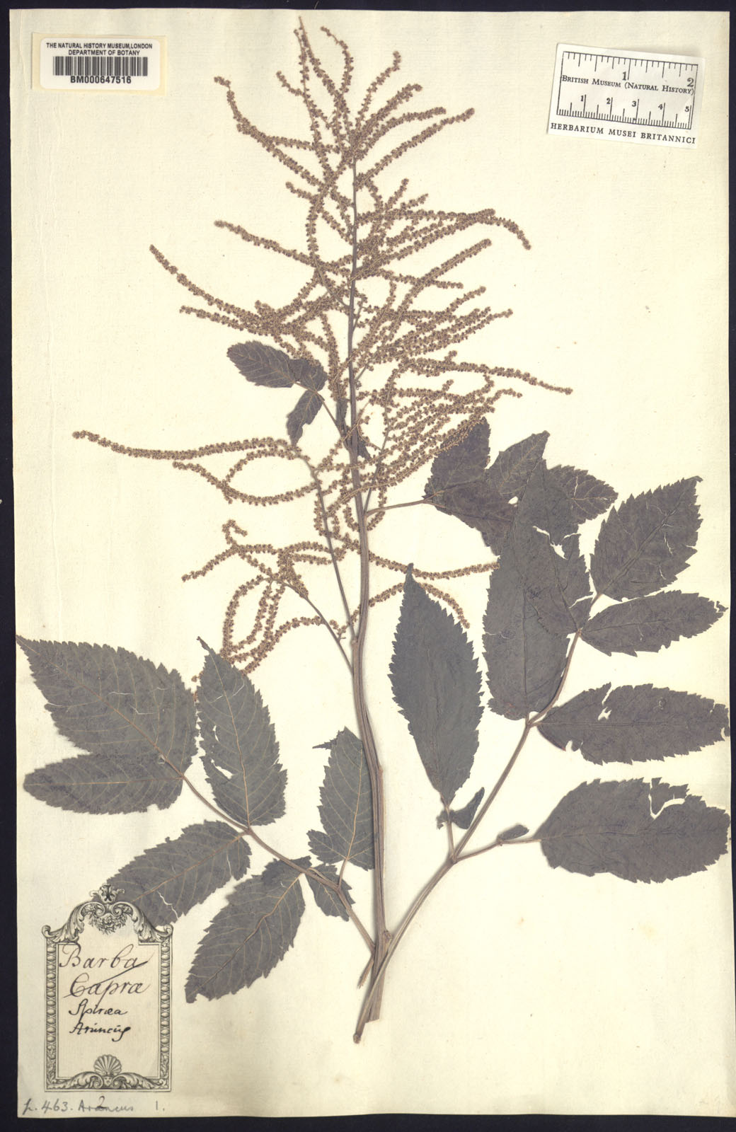 http://www.nhm.ac.uk//resources/research-curation/projects/clifford-herbarium/lgimages/BM000647516.JPG